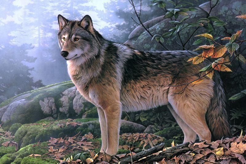 Belles images loups - Image de loup a imprimer ...