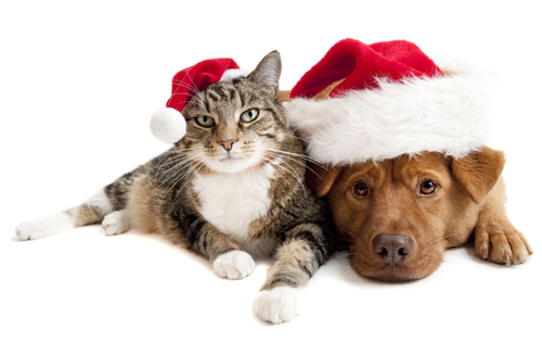 1-christmas-animals-1-1.png
