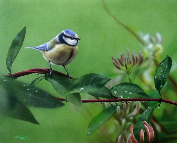 ANIMAUX: oiseaux-birds