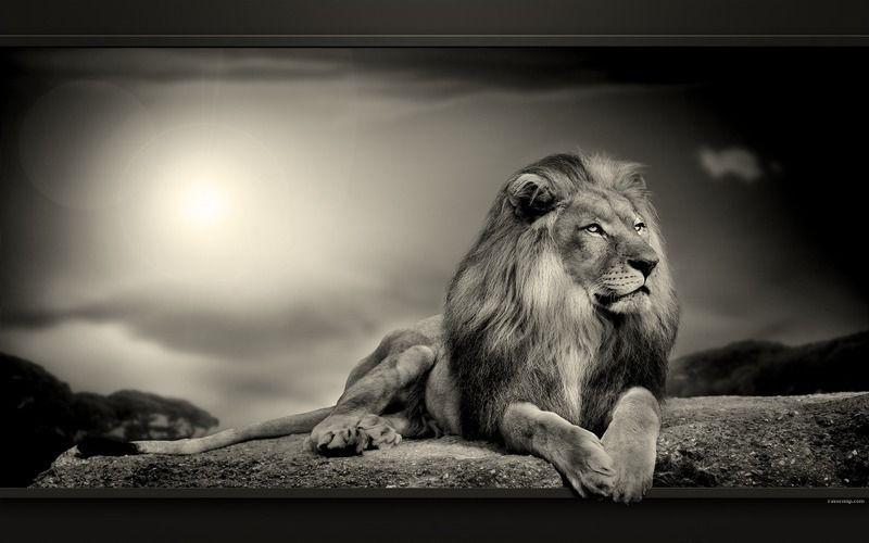 Super belles images animaux sauvages RW14