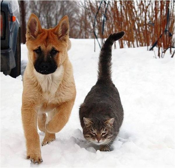 ANIMAUX chiens et chats