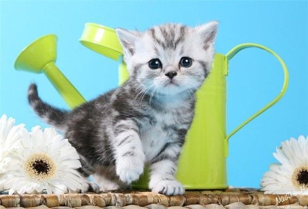 ANIMAUX : chats 1