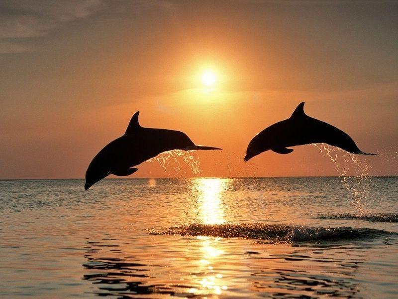 3494-dauphins-saut-soleil-WallFizz