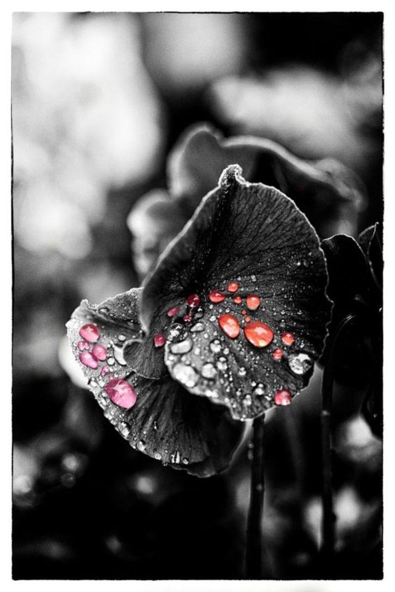 couleur noir te blanc touche couleur