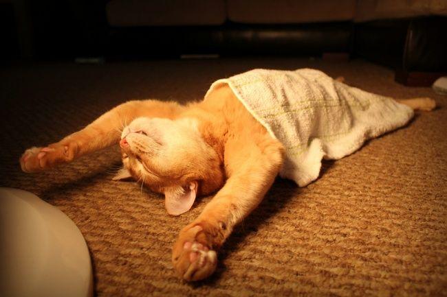 4660155-R3L8T8D-650-funny-sleeping-cats-1-1