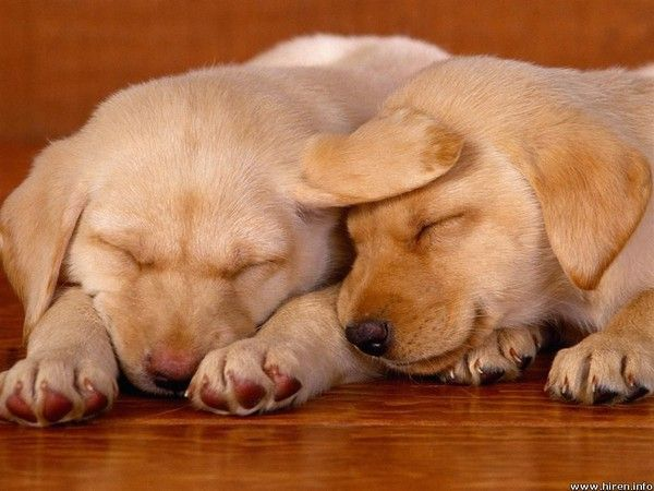 ANIMAUX: chiens- dogs