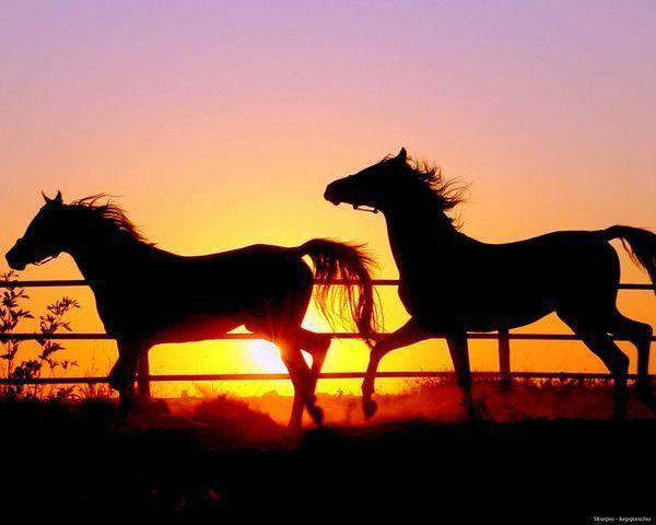 animauxchevaux horses - Photo De Chevaux A Imprimer