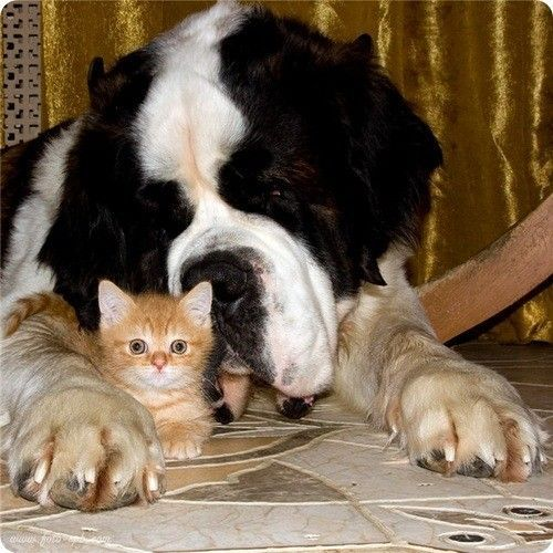 ANIMAUX : CHIENS ET CHATS