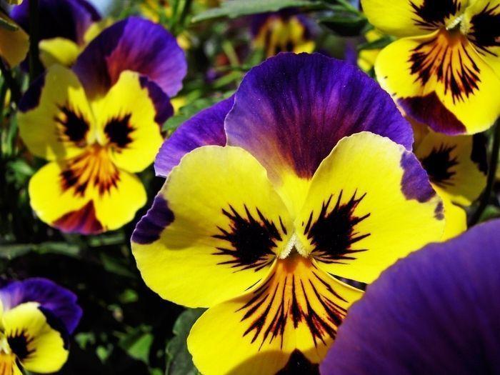 73421106_large_Flowers__83_.jpg