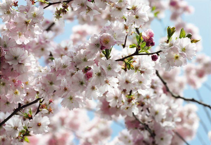 8-507_Spring_hd.jpg