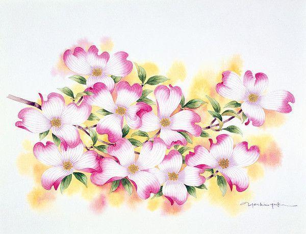 superbes illustr.de Yoshiyuki Ibaragi