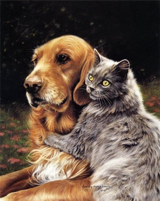 ANIMAUX : CHATS