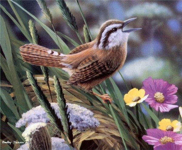 ANIMAUX:oiseaux