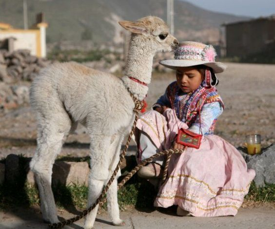 ALPAGA-PERU.jpg