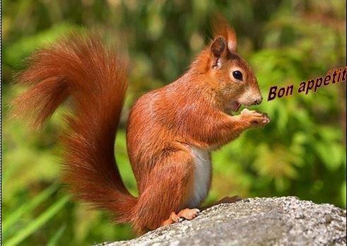 BONAPP~12.jpg