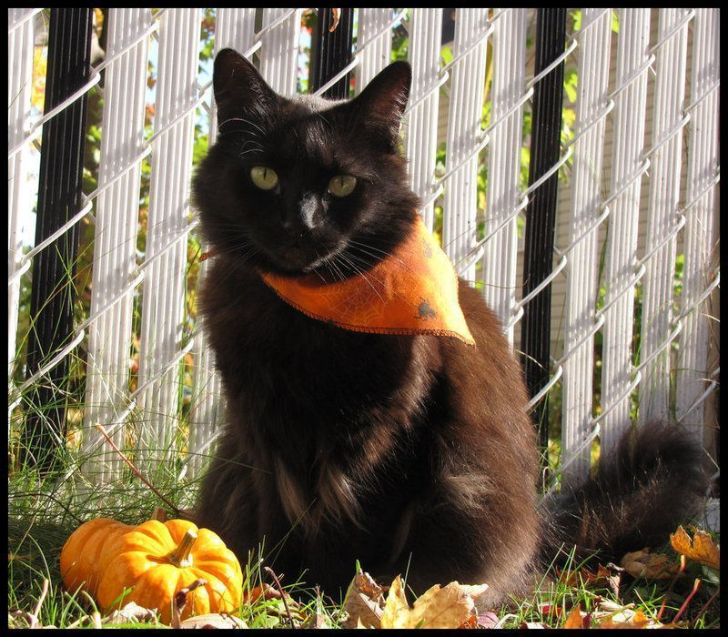 Black_cat_for_Halloween_1_by_MorbidMorticia_1.jpg