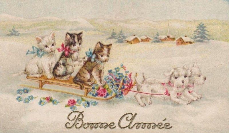 C-CAT-BA-MISS-MR-CAT-3-SLEDGE-DOG-2.jpg