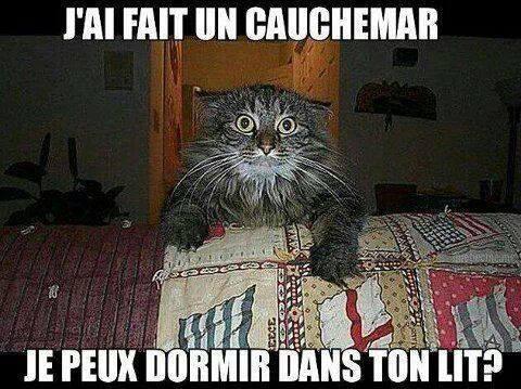CAUCHE~127.jpg