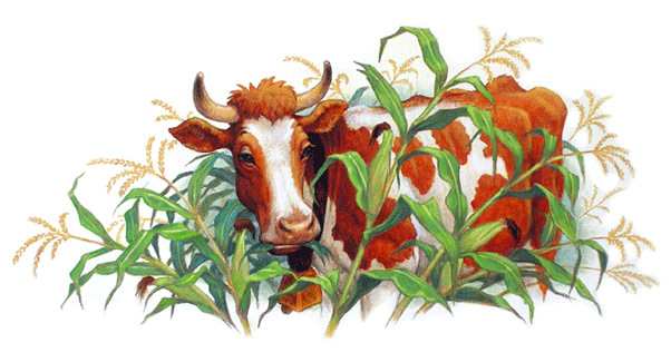 Cows_in_Corn.png