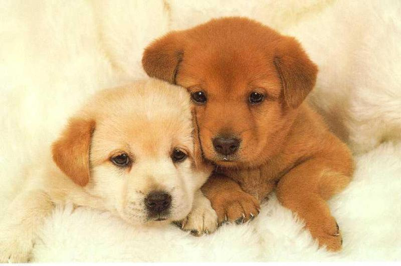 Cute-Doggies-avatarluver990-9239683-800-531.jpg