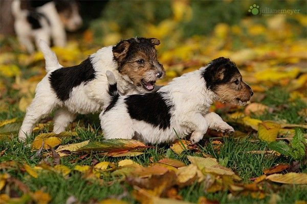 ANIMAUX ,CHIENS, DOGS