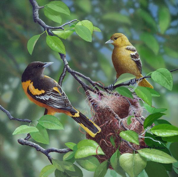 ANIMAUX: oiseaux- birds
