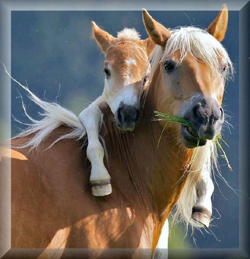 aa_cheval_2-Copie.jpg