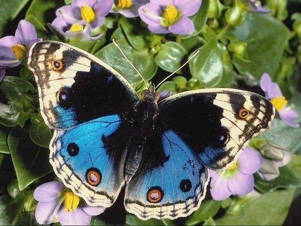 papillons et insectes divers