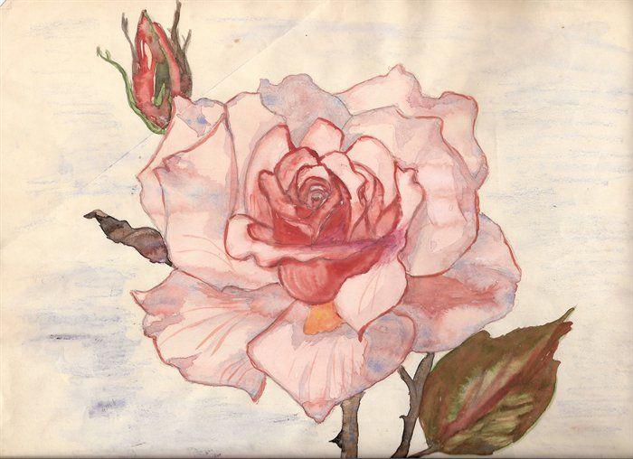 antique-rose.jpg
