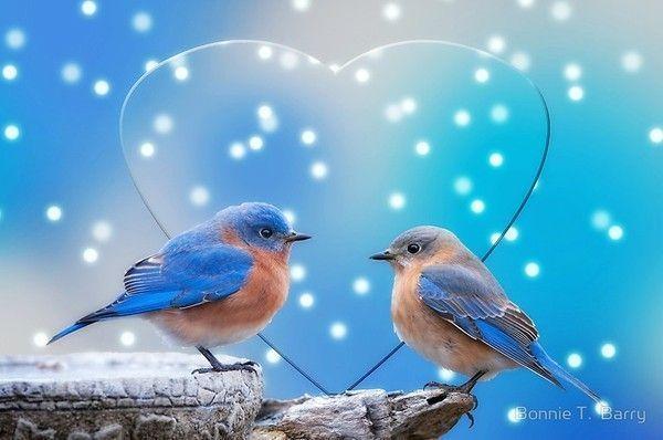 ANIMAUX : oiseaux - BIRDS