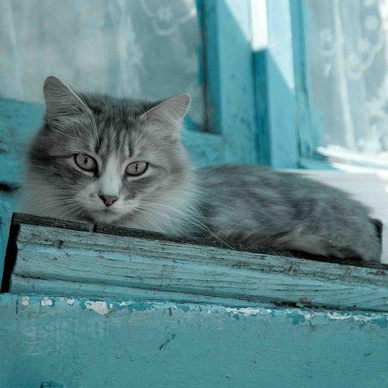 Les chats - Page 7 B78152e56431242ded39bbfa4fa6ff98