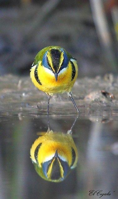 ANIMAUX : oiseaux -BIRDS