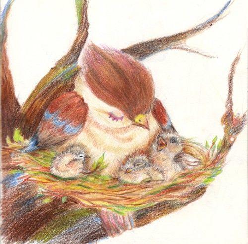 bird_nestlings-500x493.jpg