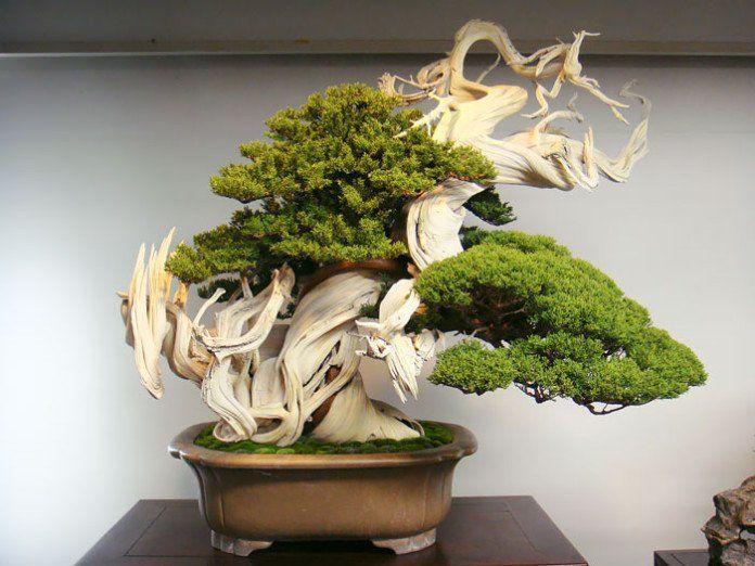 bonsai-photos-magnifiques-02-696x522.jpg