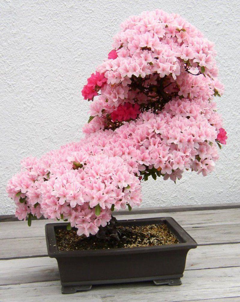 bonsai-photos-magnifiques-07-696x877.jpg