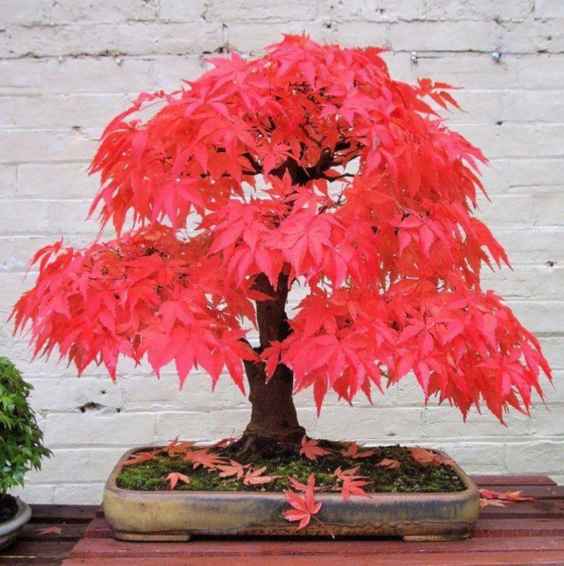 bonsai-photos-magnifiques-08-696x699.jpg