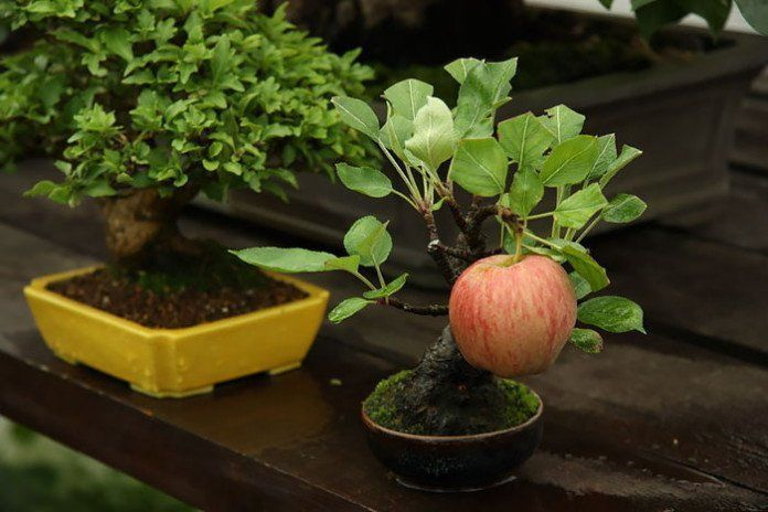 bonsai-photos-magnifiques-09-696x464.jpg
