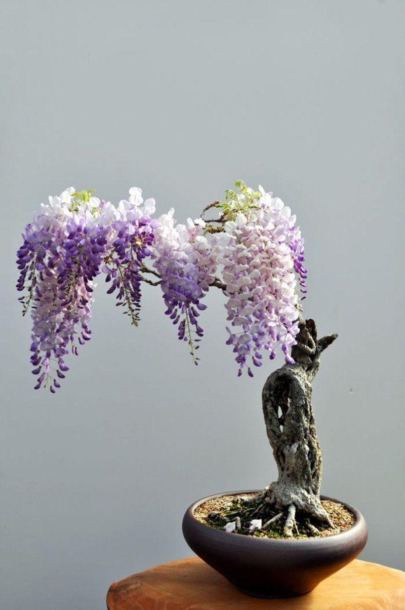 bonsai-photos-magnifiques-10-696x1048.jpg