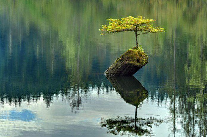 bonsai-photos-magnifiques-12-696x460.jpg