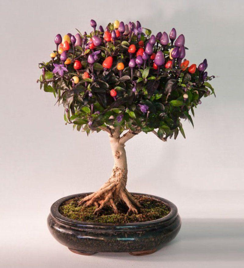 bonsai-photos-magnifiques-13-696x764.jpg
