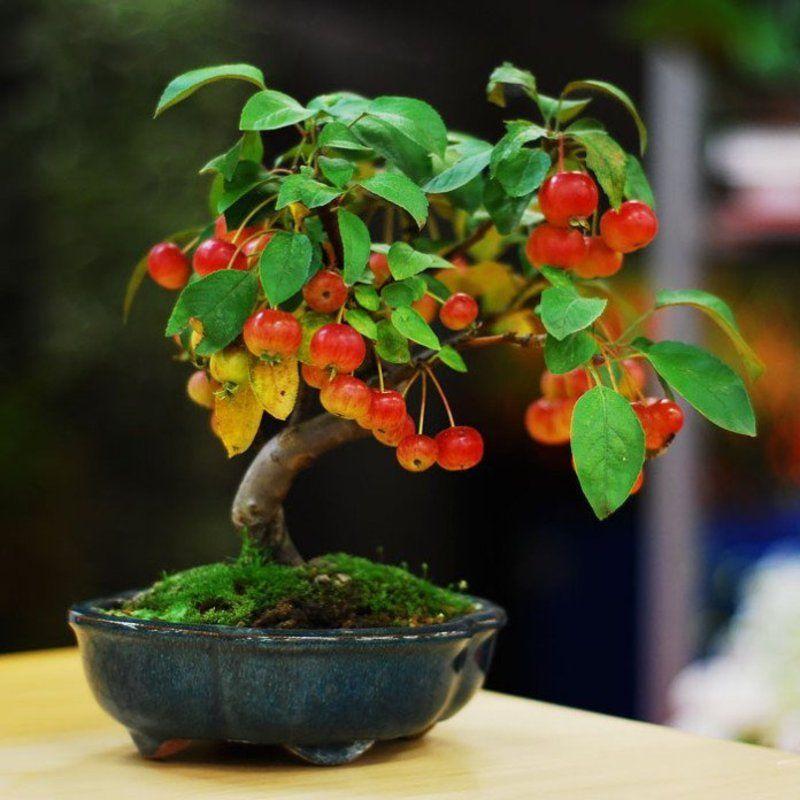 bonsai-photos-magnifiques-15-696x696.jpg