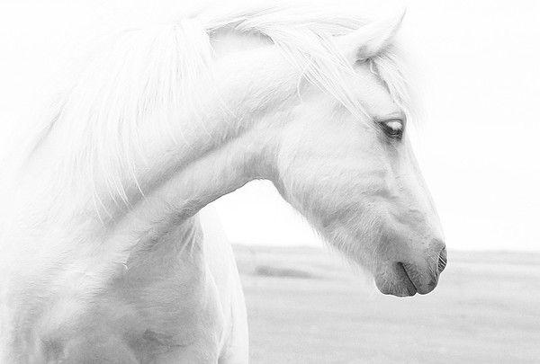 ANIMAUX : chevaux