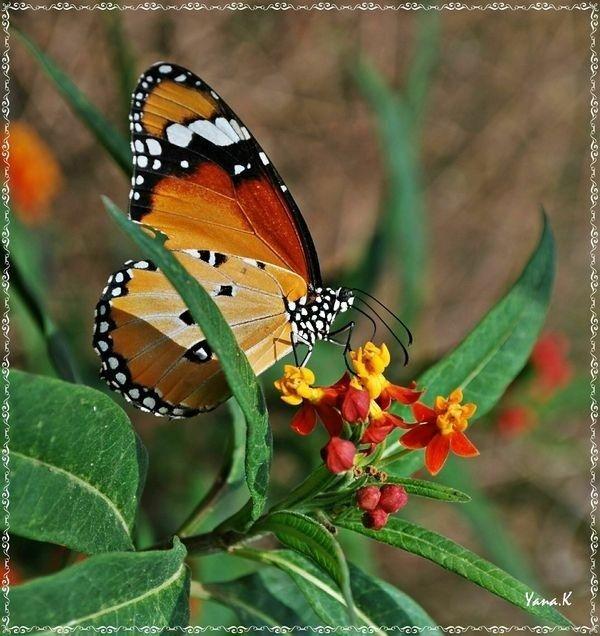 ANIMAUX : papillons et insectes divers