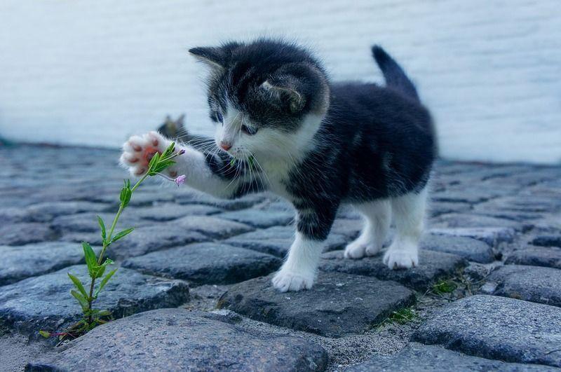 cat-2536662_960_720.jpg