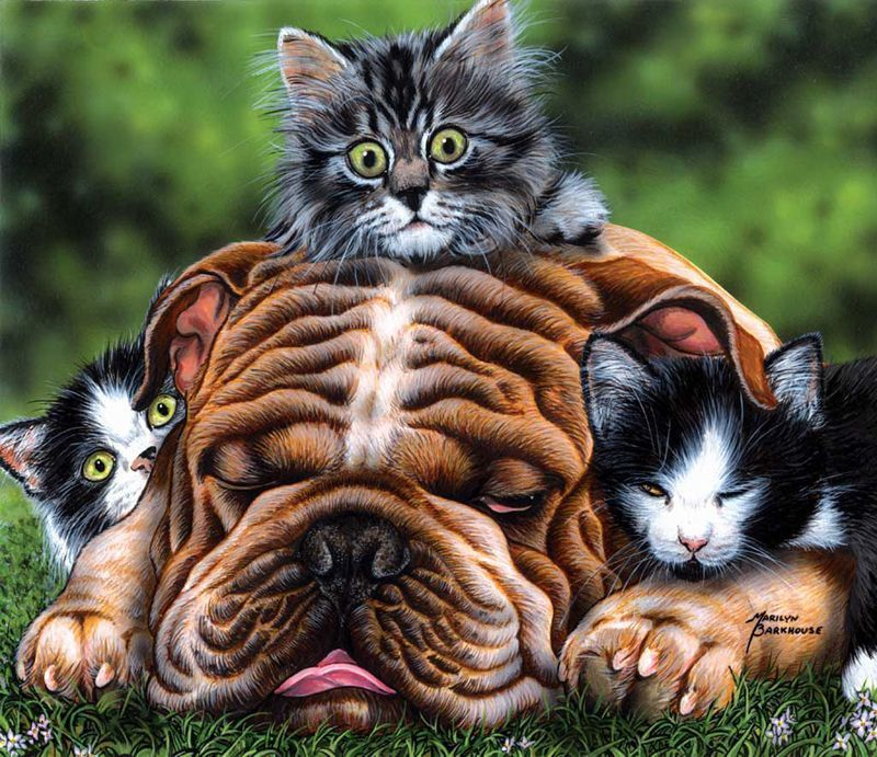 cats_and_dogs_08_1.jpg