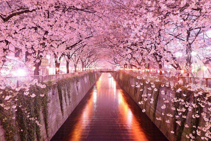 ces-30-couloirs-de-fleurs-et-d-arbres-d-une-beaute-saisissante-369051.jpg
