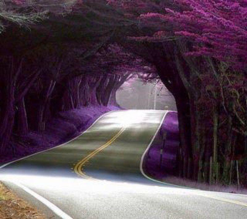ces-30-couloirs-de-fleurs-et-d-arbres-d-une-beaute-saisissante-468654.jpg