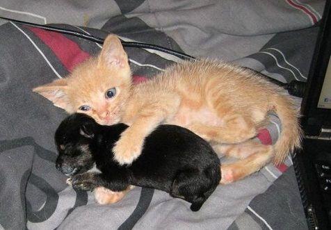 chat-et-chien.jpg