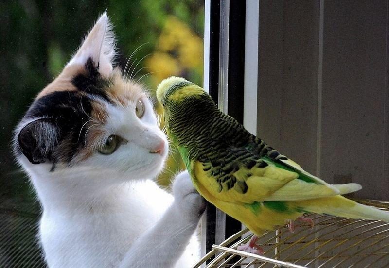 chat-et-oiseau.jpg
