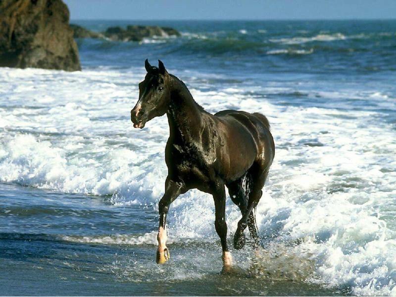 chevaux012.jpg